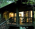 Phinda Forest Lodge, Phinda Private Game Reserve Accommodation